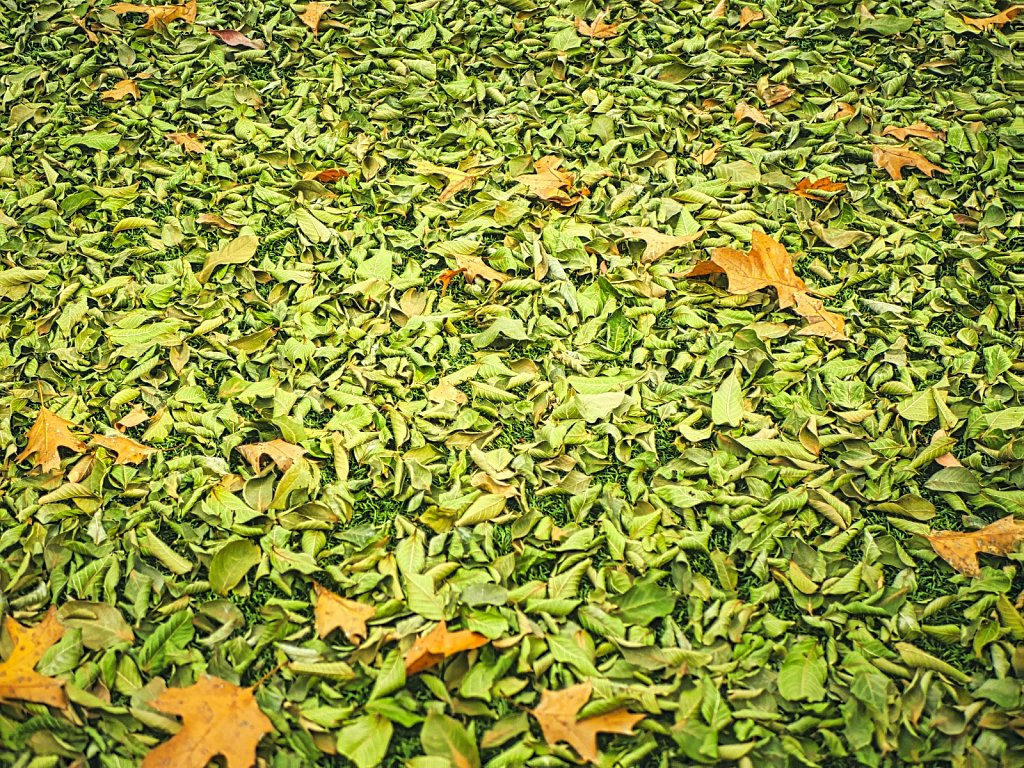 Artificial Grass with Leafs