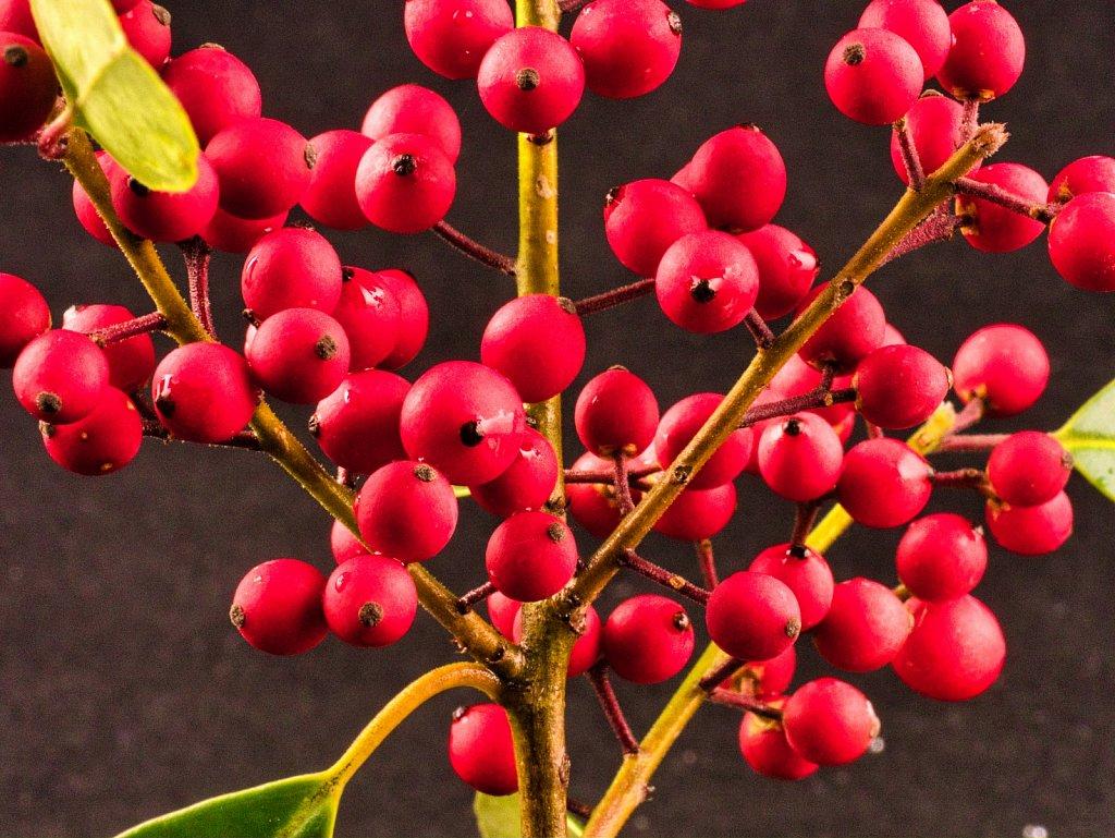 Cherries-alot-leica-lens.jpeg