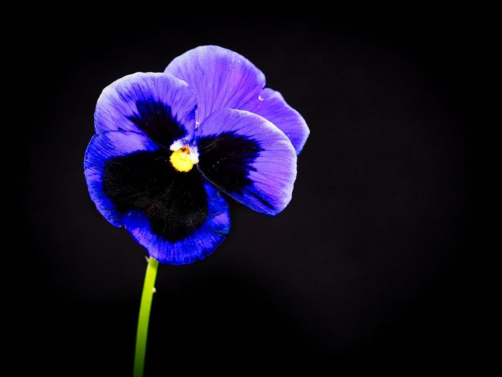 Purple-Flower-Leica-45mm.jpeg