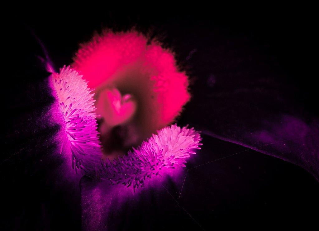 Purple-Flower-Pollen-Leica-45mm-Macro.jpeg