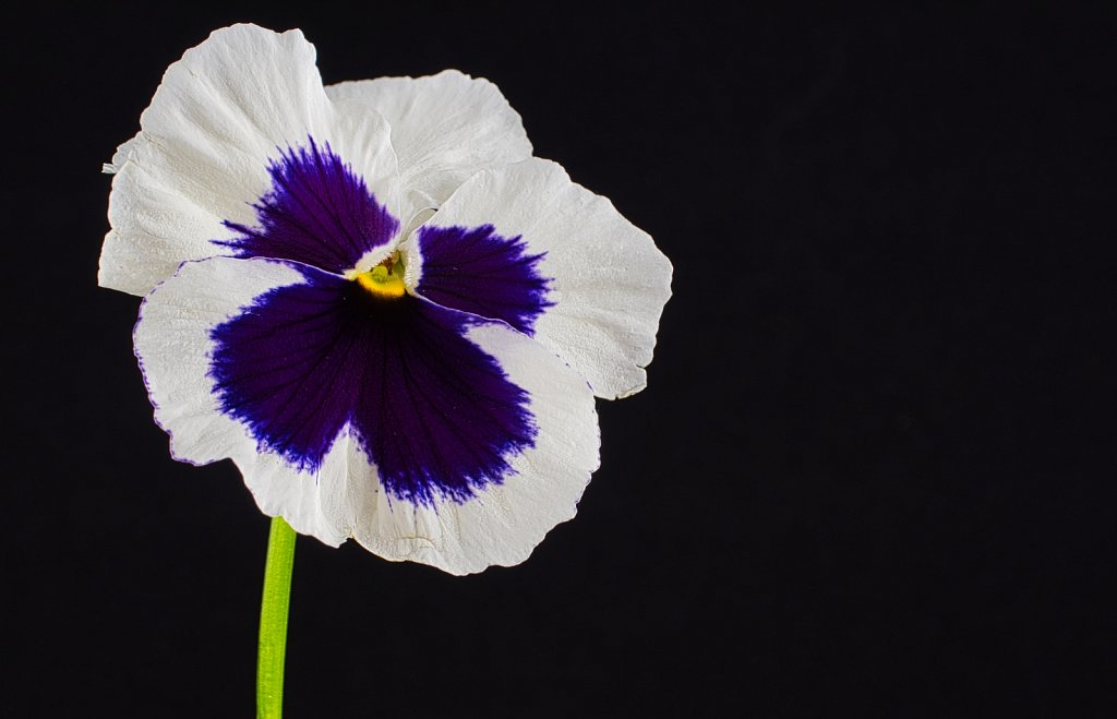 White-Flower-Leica-45mm.jpeg