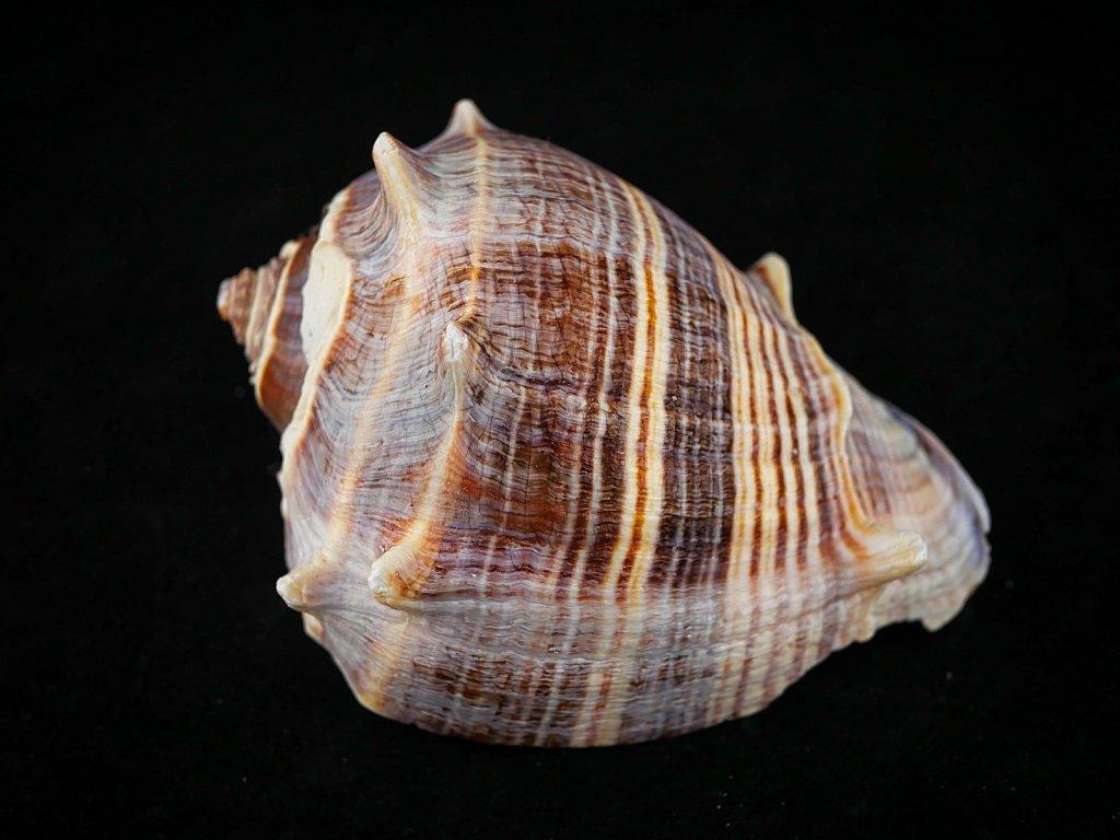 Shell-Lumix-25mm-00002.jpeg