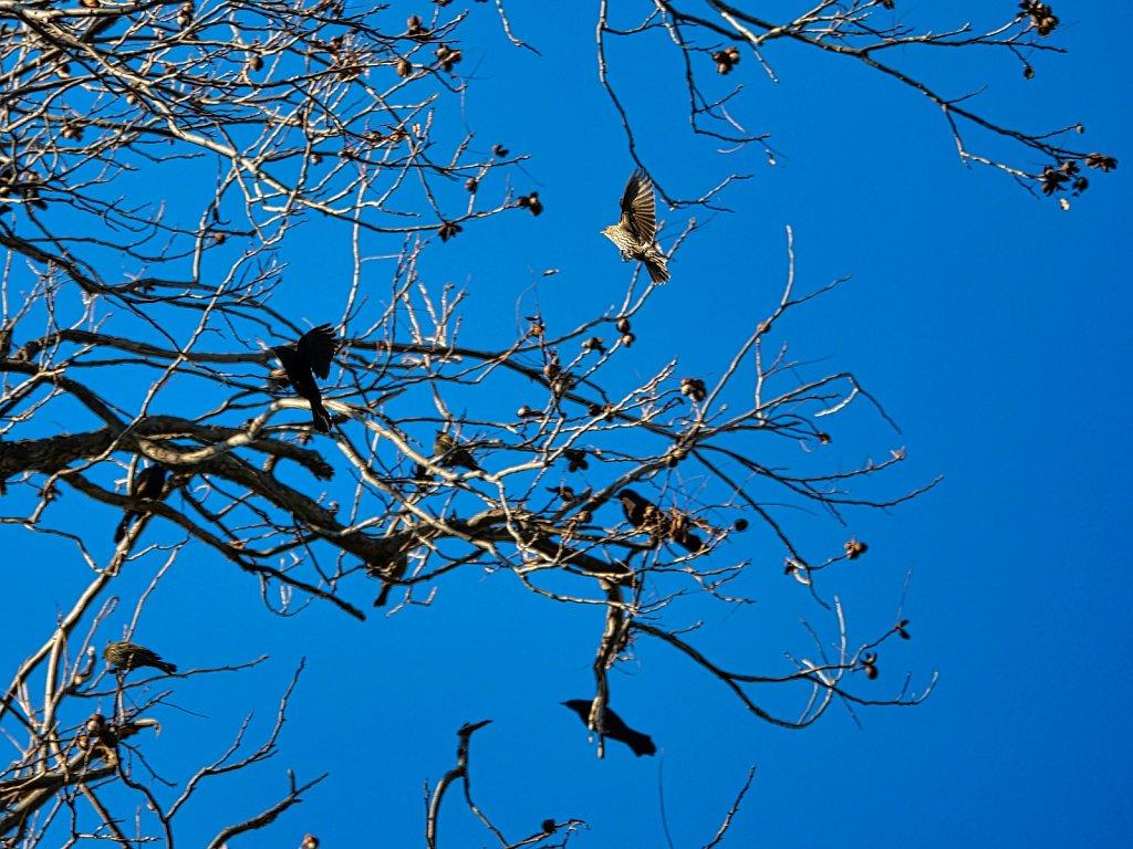 2-Birds-Flying-Lumix-100-300mm.jpeg