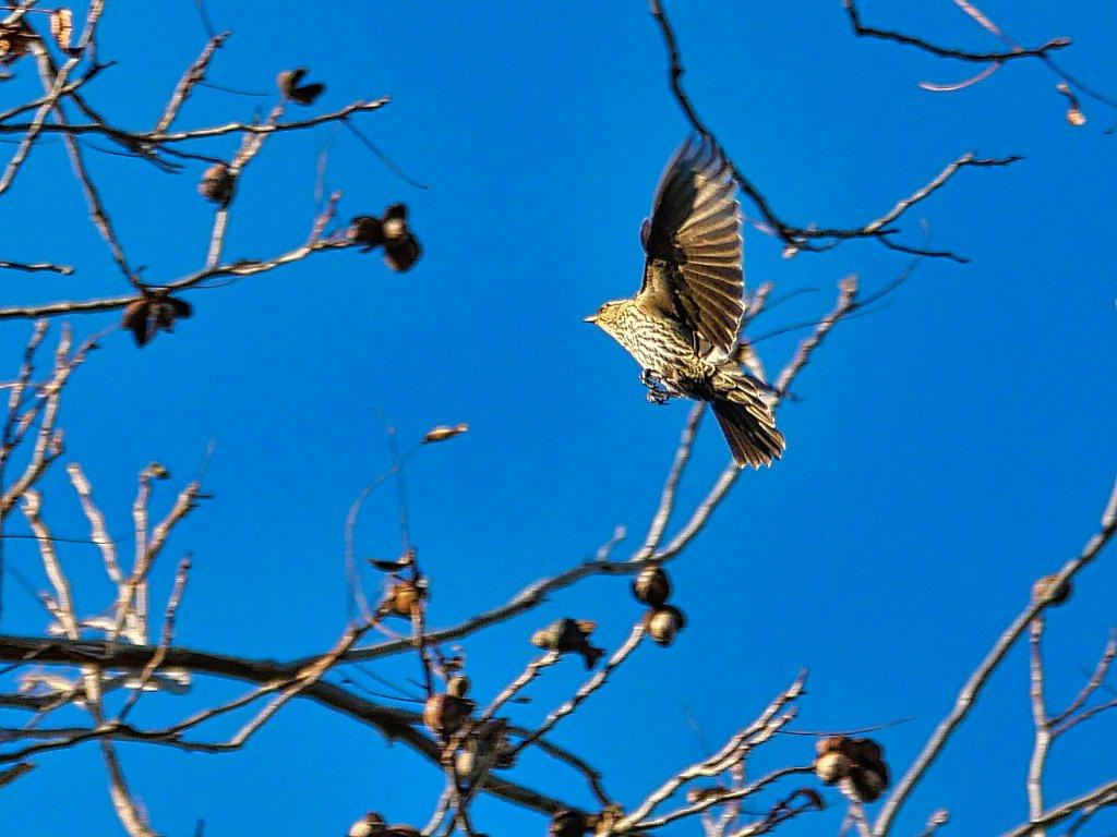 Bird-Landing-in-Branch-cut-Lumix-100-300mm.jpeg