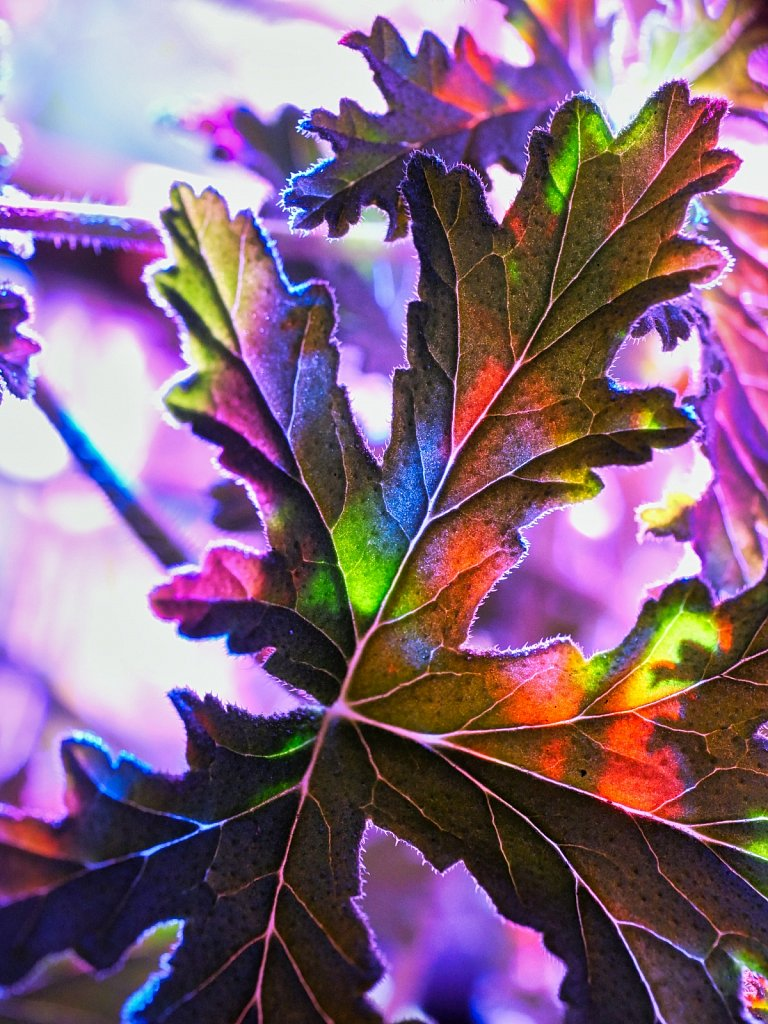 Color-Lamp-Reflecting-on-Leaf.jpeg