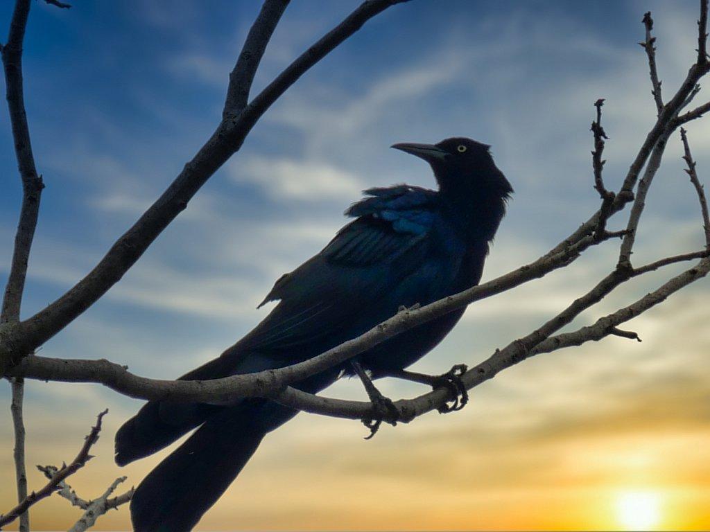 Crow-and-sunset-1.jpeg