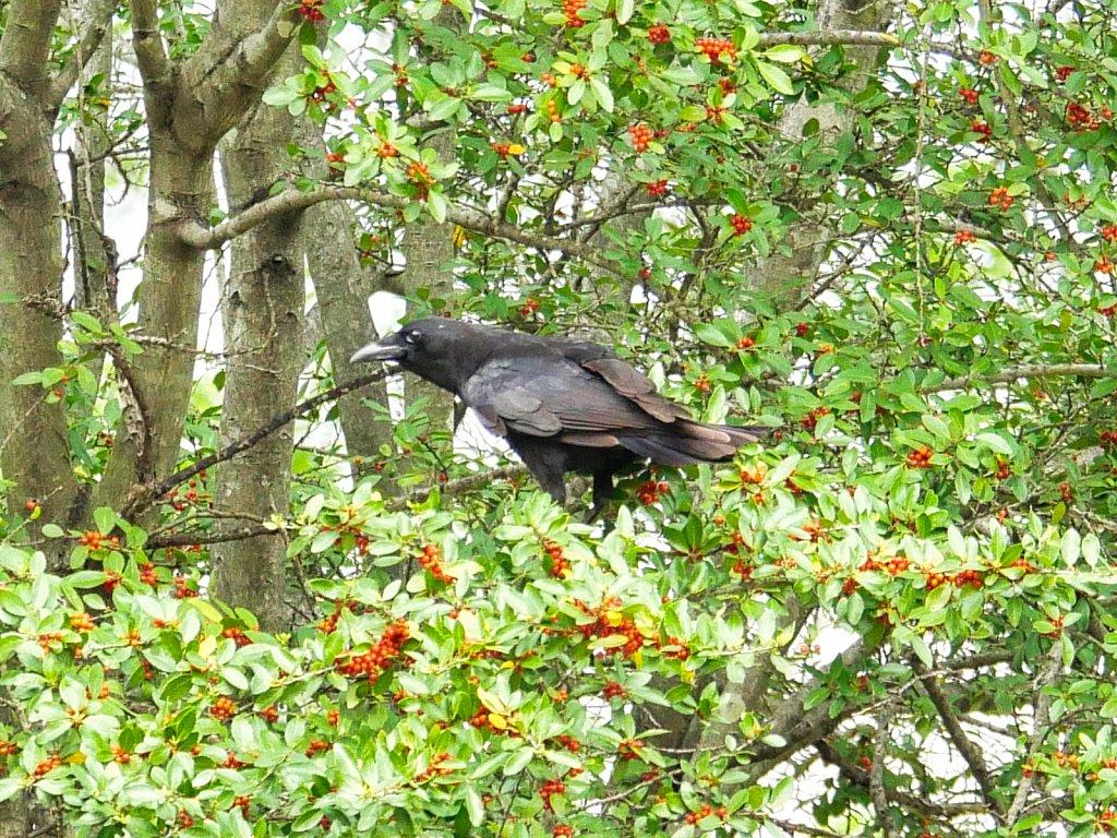 Crow-on-Tree-1.jpeg