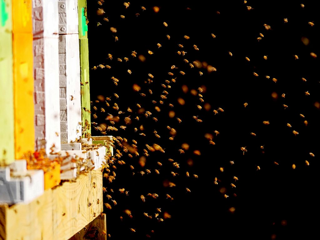 Bees-Coming-Back-to-the-Hives-00003.jpg