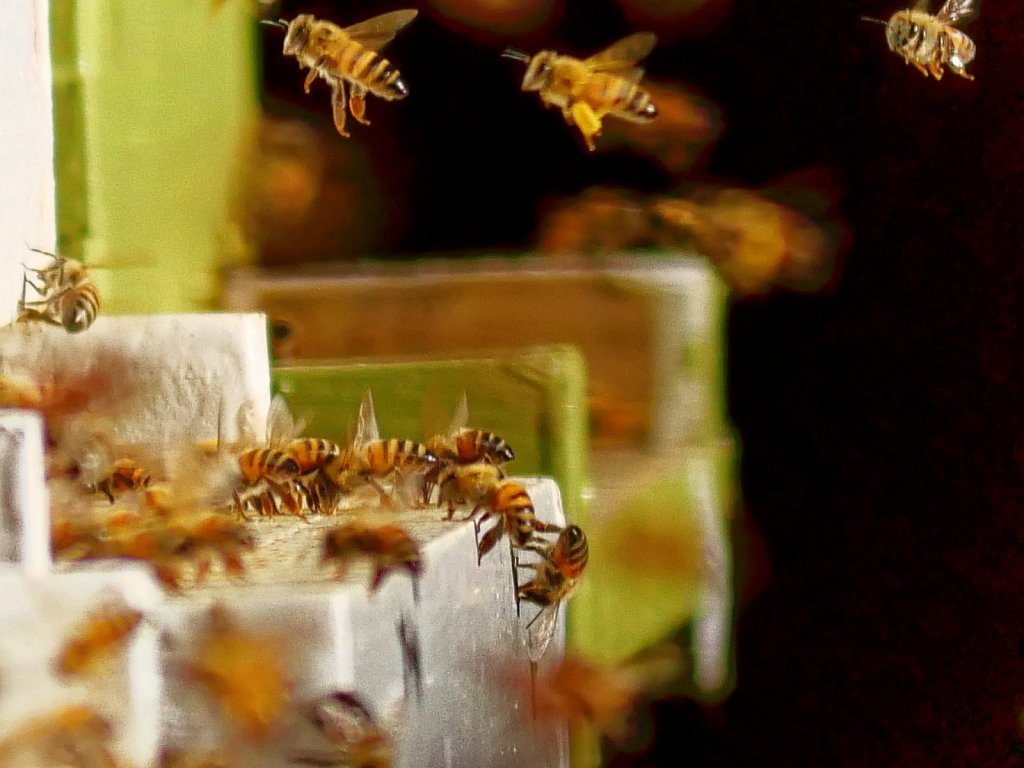 Bees-Coming-Back-to-the-Hives-00001.jpg
