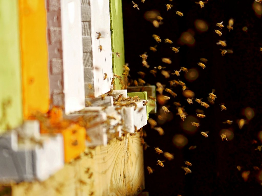 Bees-Coming-Back-to-the-Hives-00006.jpg