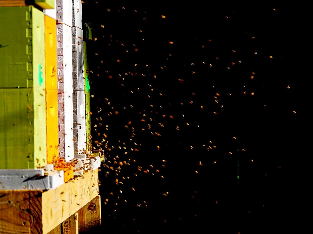 Bees-Coming-Back-to-the-Hives-00005.jpg