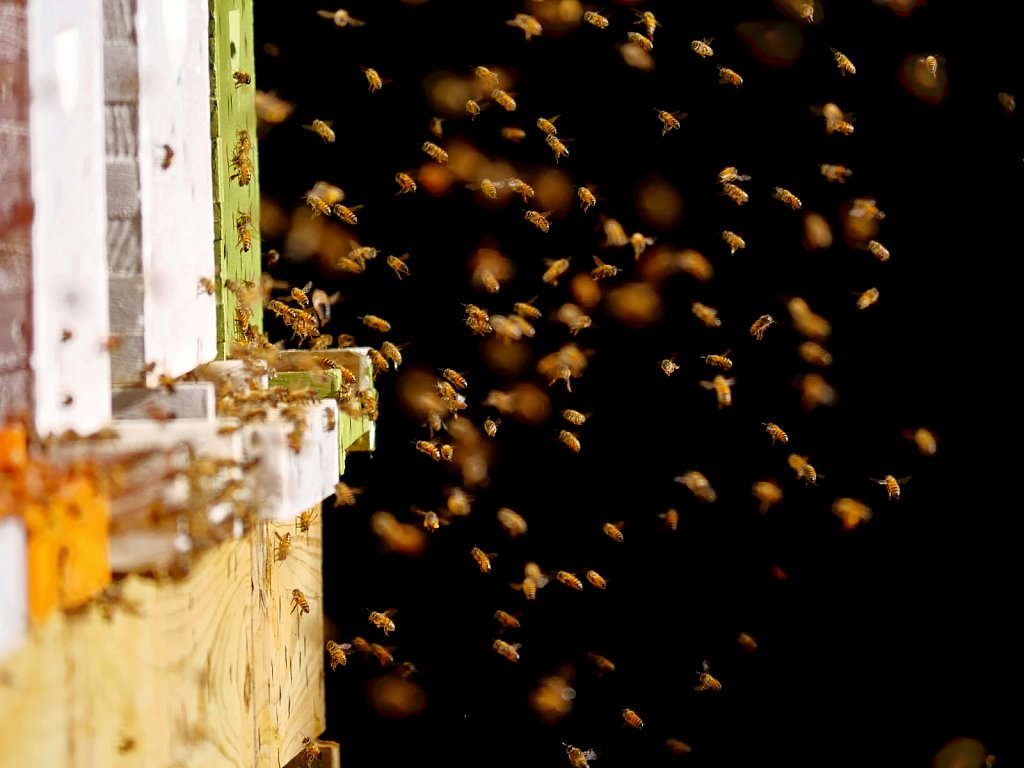 Bees-Coming-Back-to-the-Hives-00009.jpg