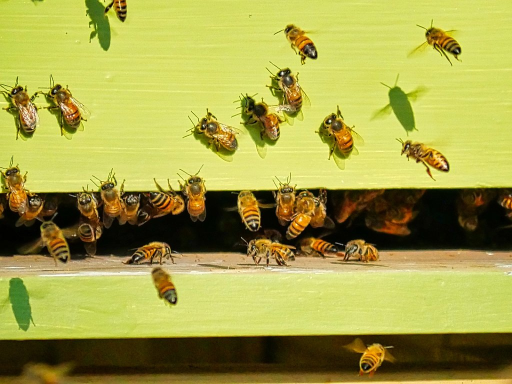 Bees-Flying-in-at-sunset-00004.jpeg