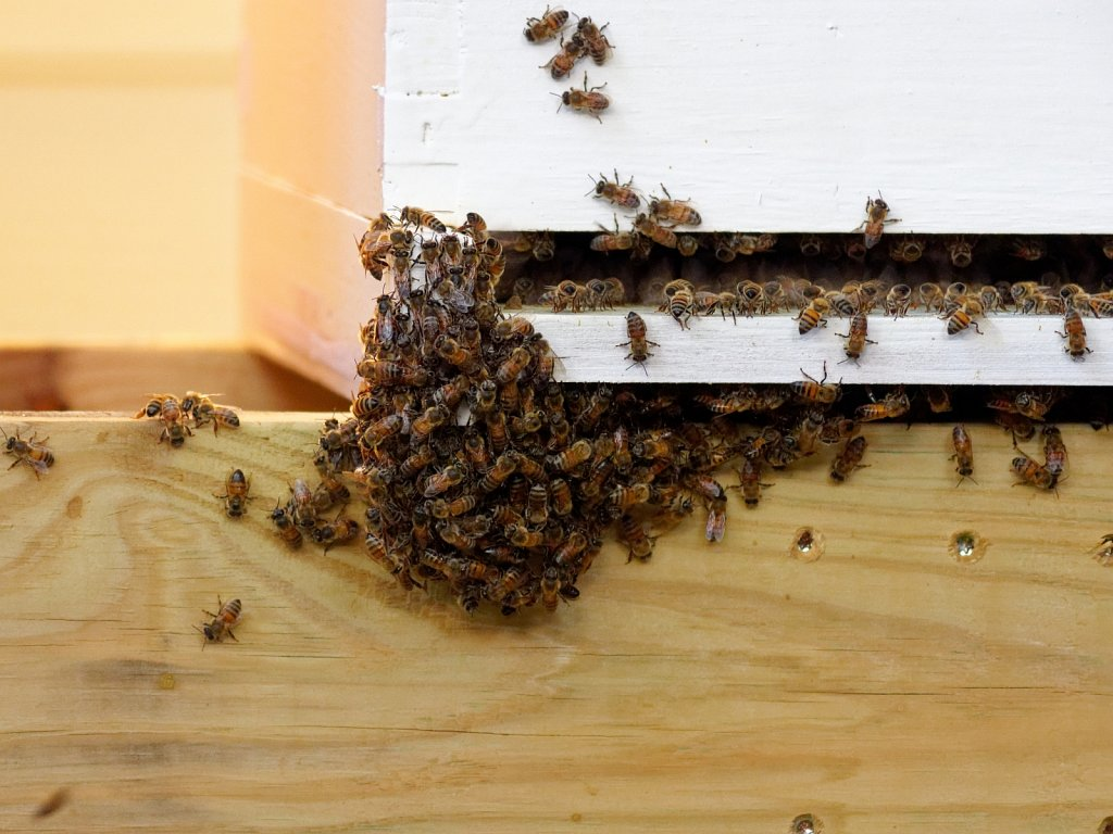 Bees-Coming-Back-to-the-Hives-00002.jpg