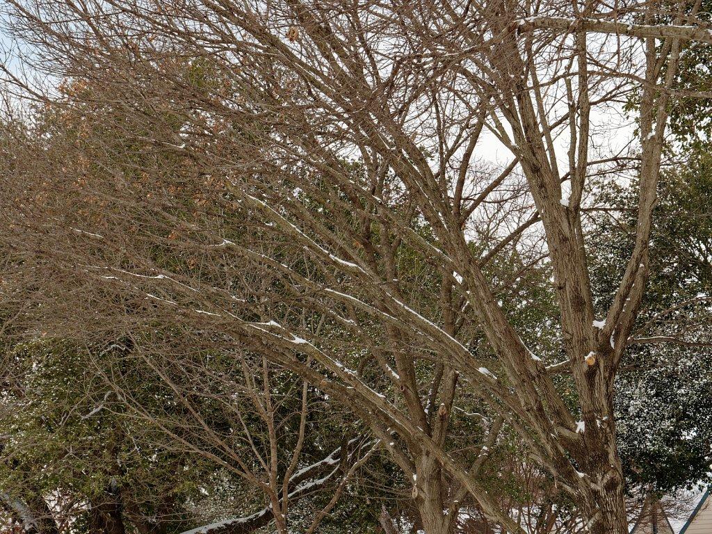 Dallas-Ice-Storm-2021-00005.jpg