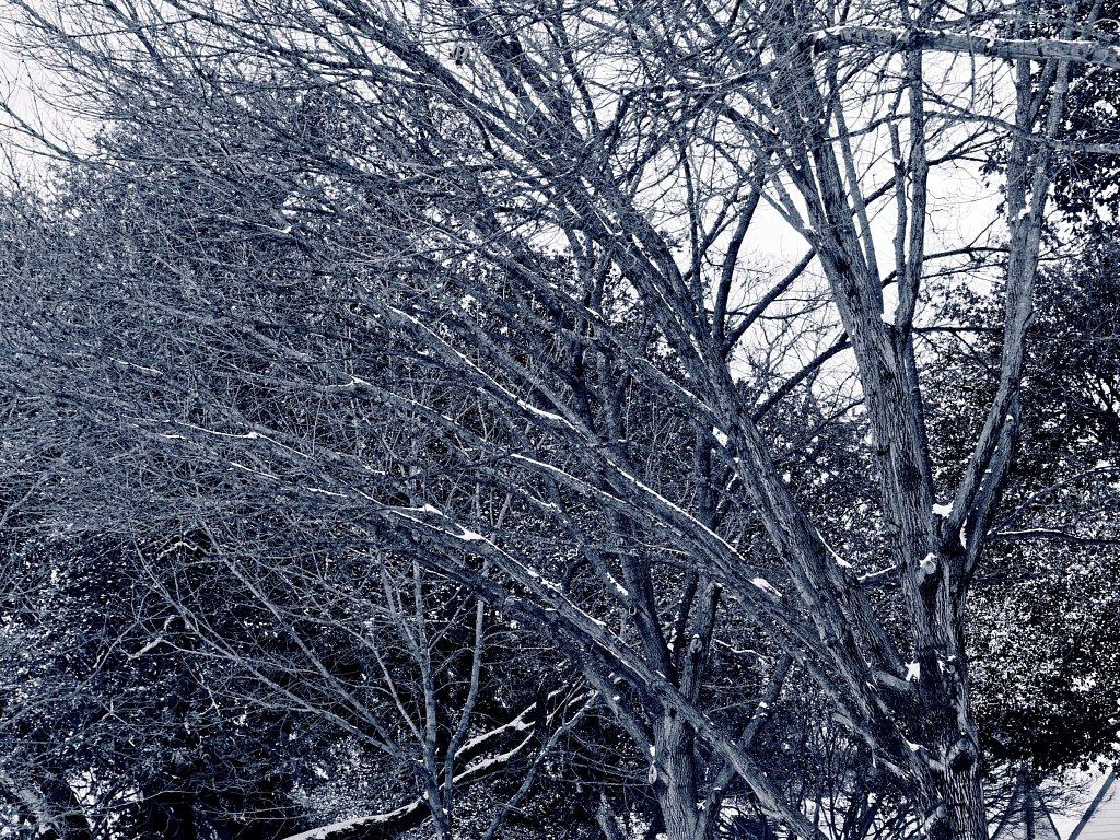 Trees-with-Snow-Dallas-Ice-Storm-2021-Polar-00002.jpg