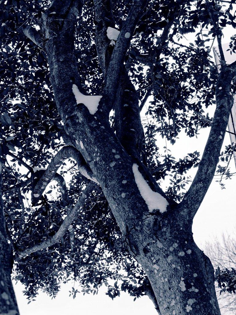 Trees-with-Snow-Dallas-Ice-Storm-2021-Polar-00003.jpg