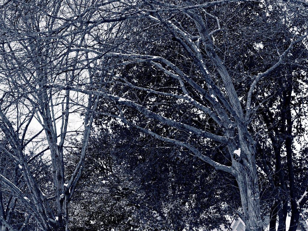 Trees-with-Snow-Dallas-Ice-Storm-2021-Polar-00001.jpg