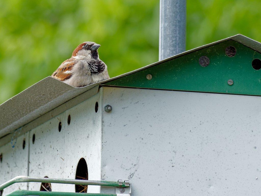 Birds in Top of Bird House