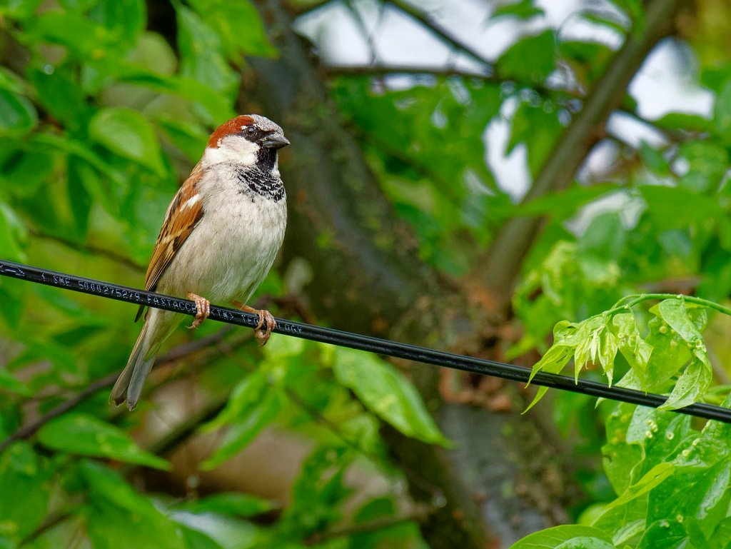 Bird on Cable Wire