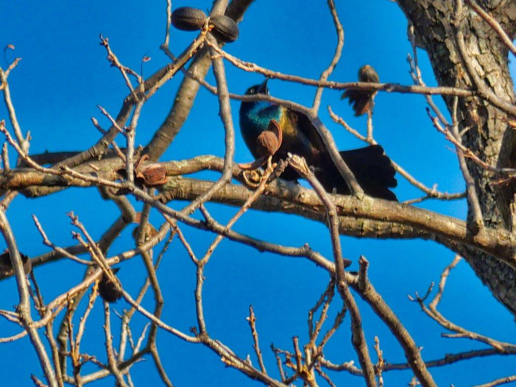 Bird-in-Tall-Tree-Lumix-100-300mm.jpeg