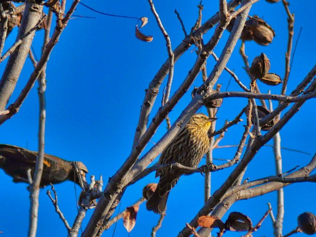 Bird-in-Sitting-in-a-tree-branch-Lumix-100-300mm.jpeg