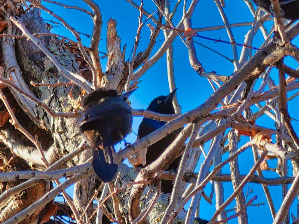 2-Bird-in-Branch-Lumix-100-300mm.jpeg