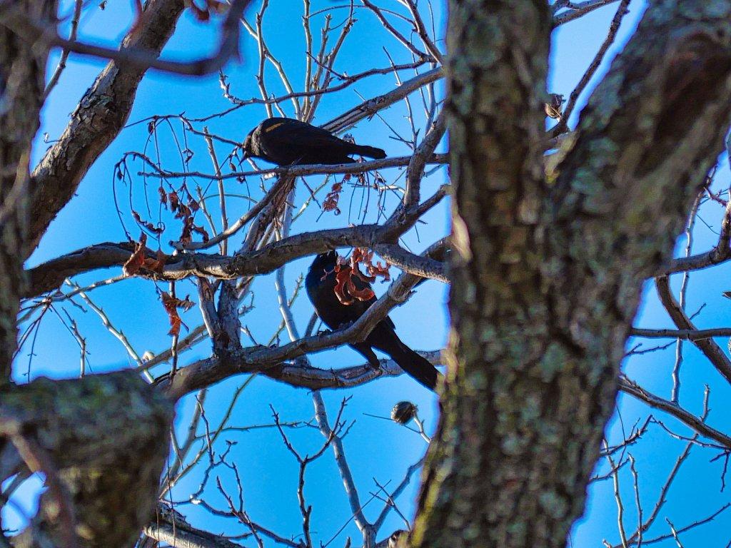 2-Bird-in-Branch-2-Lumix-100-300mm.jpeg