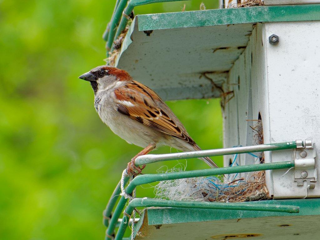 Birds in Patio